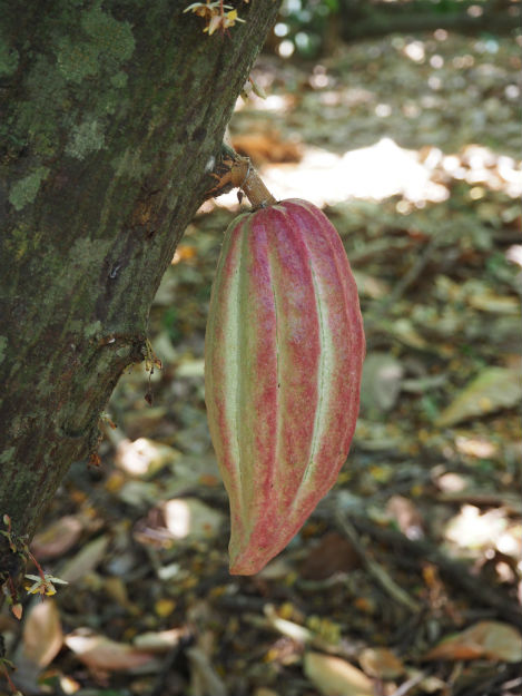 plantation-15