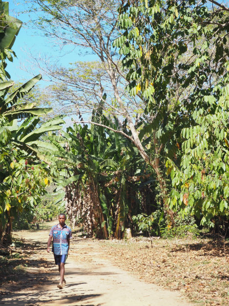 plantation-20