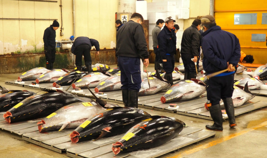 Tokyo surprenant… Les enchères de thon de Tsukiji Market.